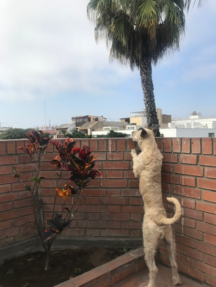 Gabriel & Ross in Lima