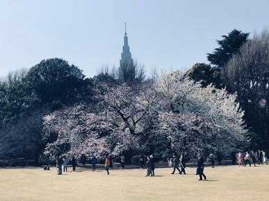 Hiro Kun in Tokyo