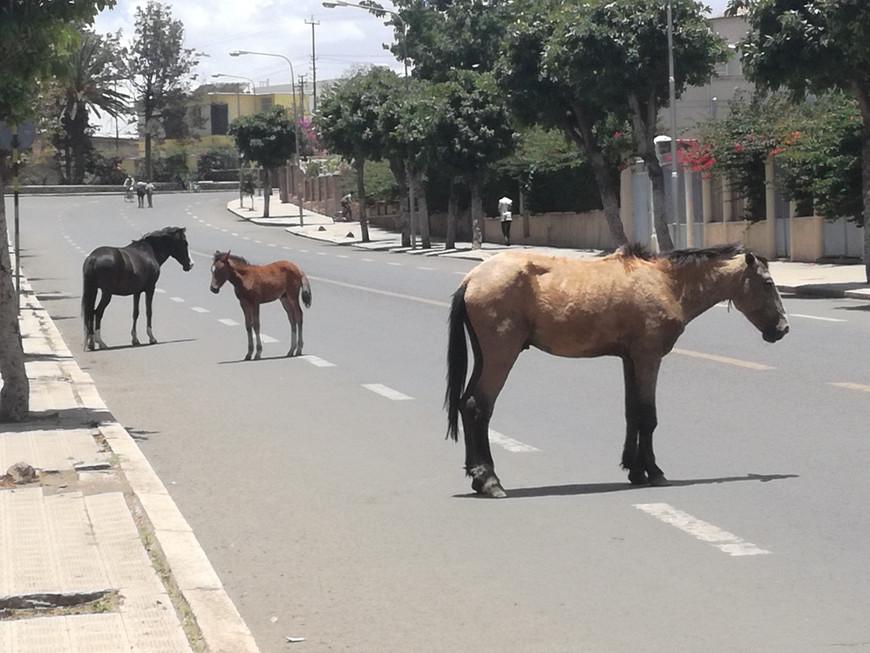 Centrale Street in Asmara, Eritrea (courtesey of AICS Khartoum)