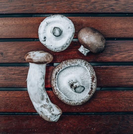 Mushrooms Dancing