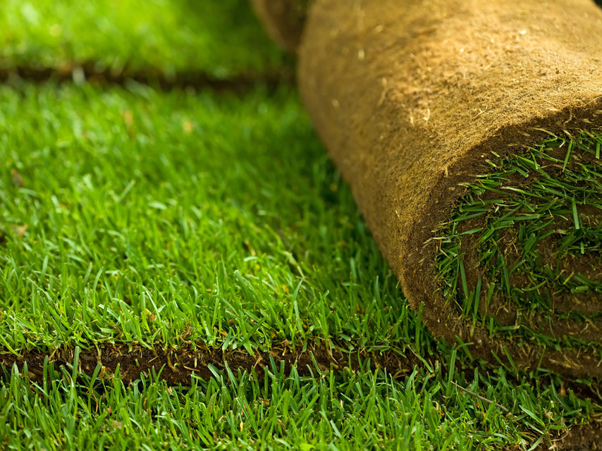 Sod Installation Service Tampa Florida