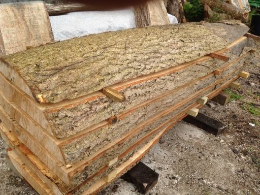 tree being made into planks
