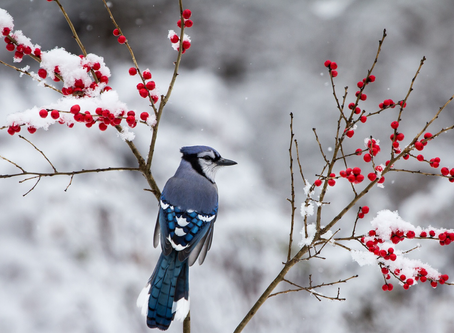 Add interest to your winter garden