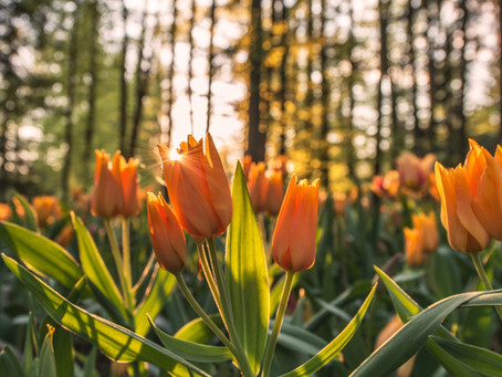 Fall Bulb Planting: Spring Ahead