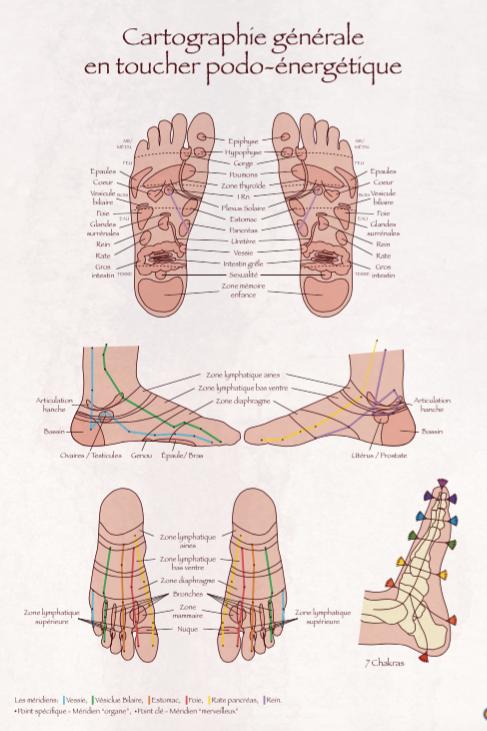 Cartographie globale des pieds