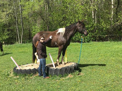 Horse Trainers in Wisconsin - Teaching your horse Trail Obstacles - Trail Obstacle Classes - Trail O