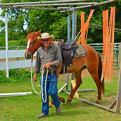Trail Obstacle Horse Training