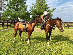 Horse Clinics - Horse Trainers near Madison Wisconsin - Wisconsin Horse Trainers - Natural Horsemans