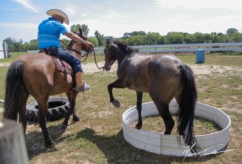 First week of training with tag #5478, Denny. Denny is learning to trust and be touched all over. Denny is a 2yr old gelding from Desatoya. The Mustang Challenge will be held at Chattahoochee Hills Eventing - November 19 - 22, 2020.