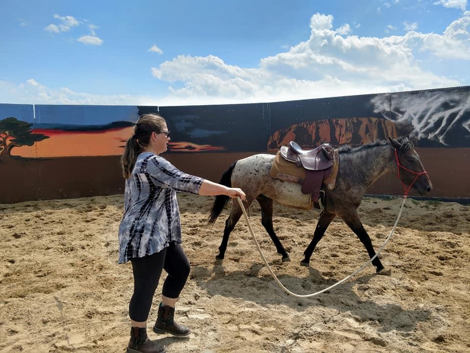 Mustang Horse Trainer - Wild Mustangs - Training wild horses - Training Mustangs - Mustang Trainer -