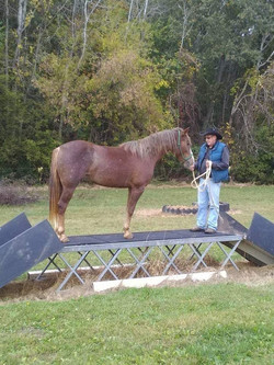 Mountain trail obstacle horse training with TJ Clibborn True Partnership Horse Training