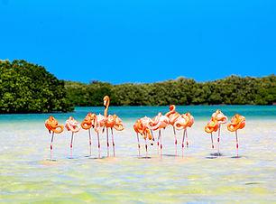 flamingos_edited.jpg