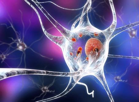 BT13 and Parkinson's Disease Treatment