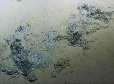 Microbes in the Mariana Trench