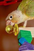 Echelle - jouet en bois perruche - jouet perruche et perroquet