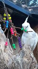 Capitaine Crochu | jouet prruche | jouet calopsitte | jouet oiseau