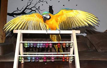 Capiaine Crochu | perchoir perroquet | jouet ara | aire de jeux perroquet