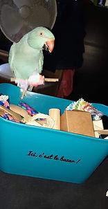Capitaine Crochu | jouet grande perruche | jouet pour oiseaux | Foraging