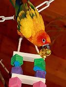 Jouet conure - jouet grande perruche - Capitaine Crochu