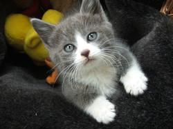 Whisker Whisperer Pet Sitting