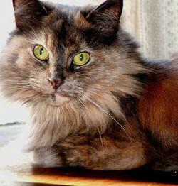 Pet Sitting Benton AR