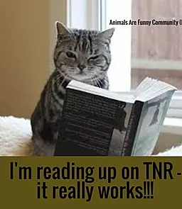 cat - reading up on tnvr.webp