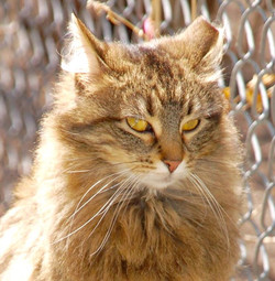 cat - beall3