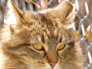 How Many Feral Cats Are There in the U.S.?
