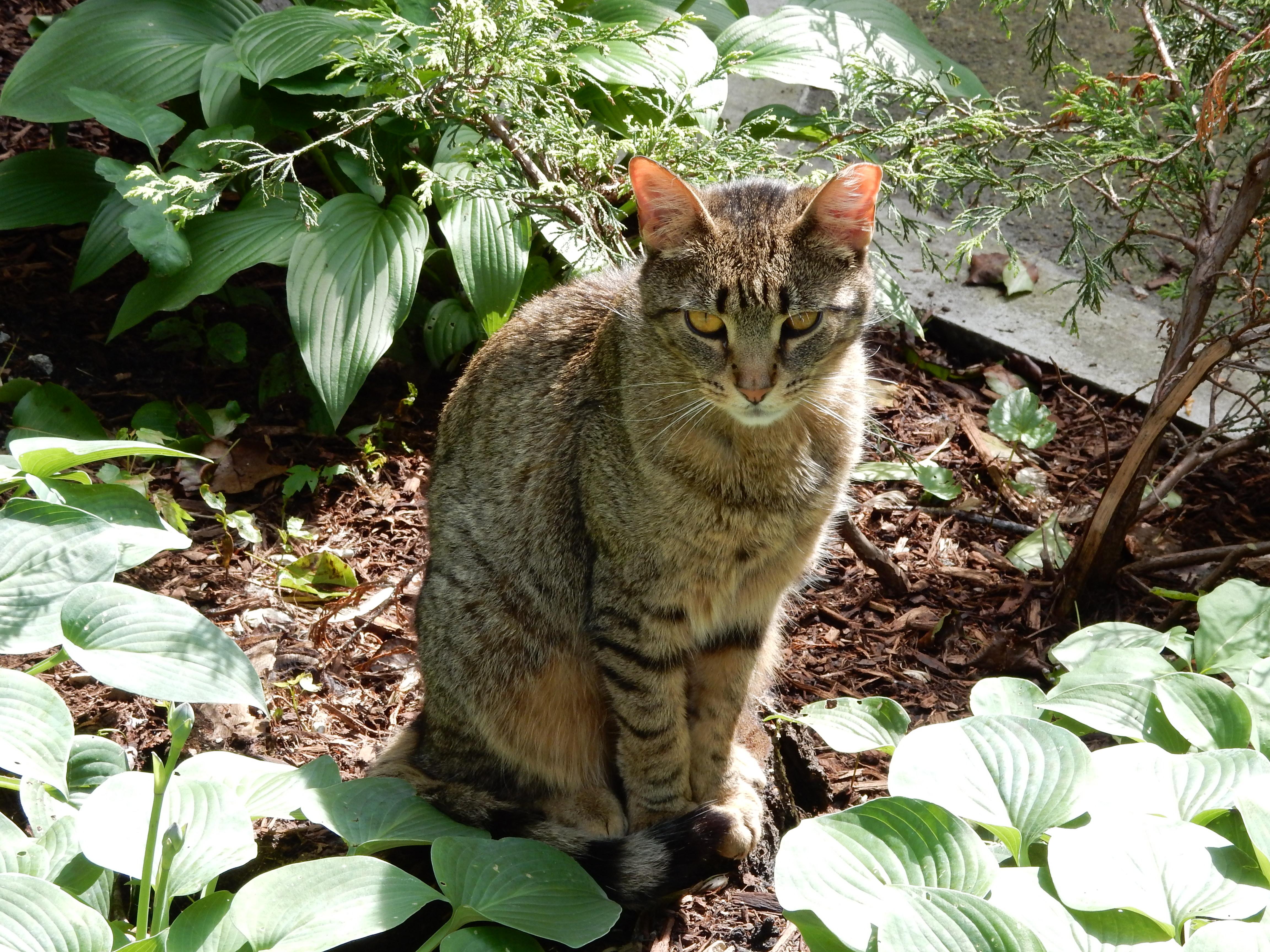 Cat - Beall
