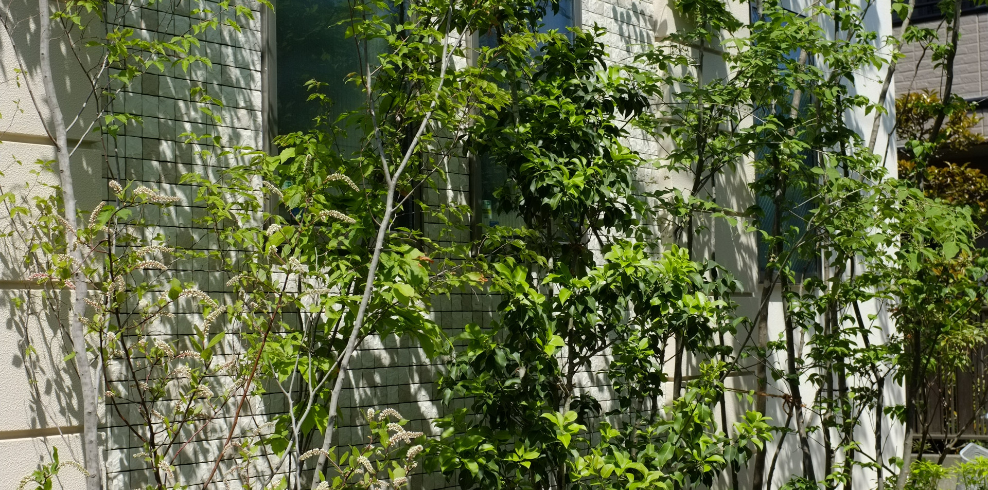 東京の庭づくり、雑木の庭づくり