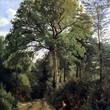 Ville d'Avray, fermière en bordure des bois, Camille Corot 1825