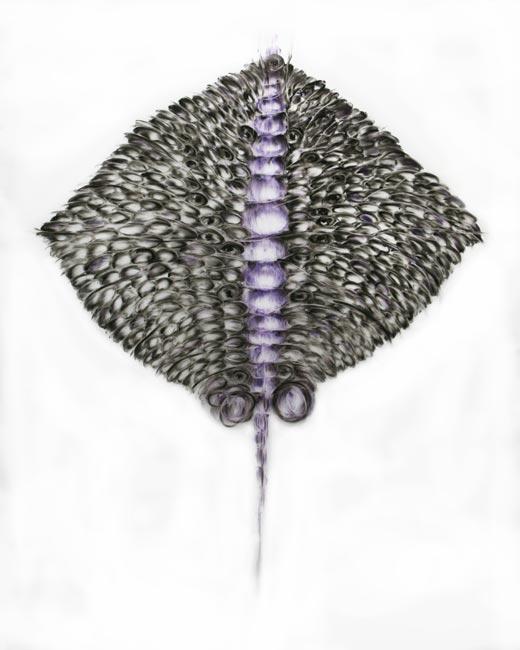 Grande Métamorphose Pastenague
