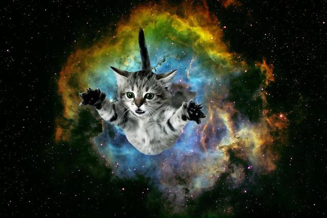 Swanmountain Yoga Space Cat