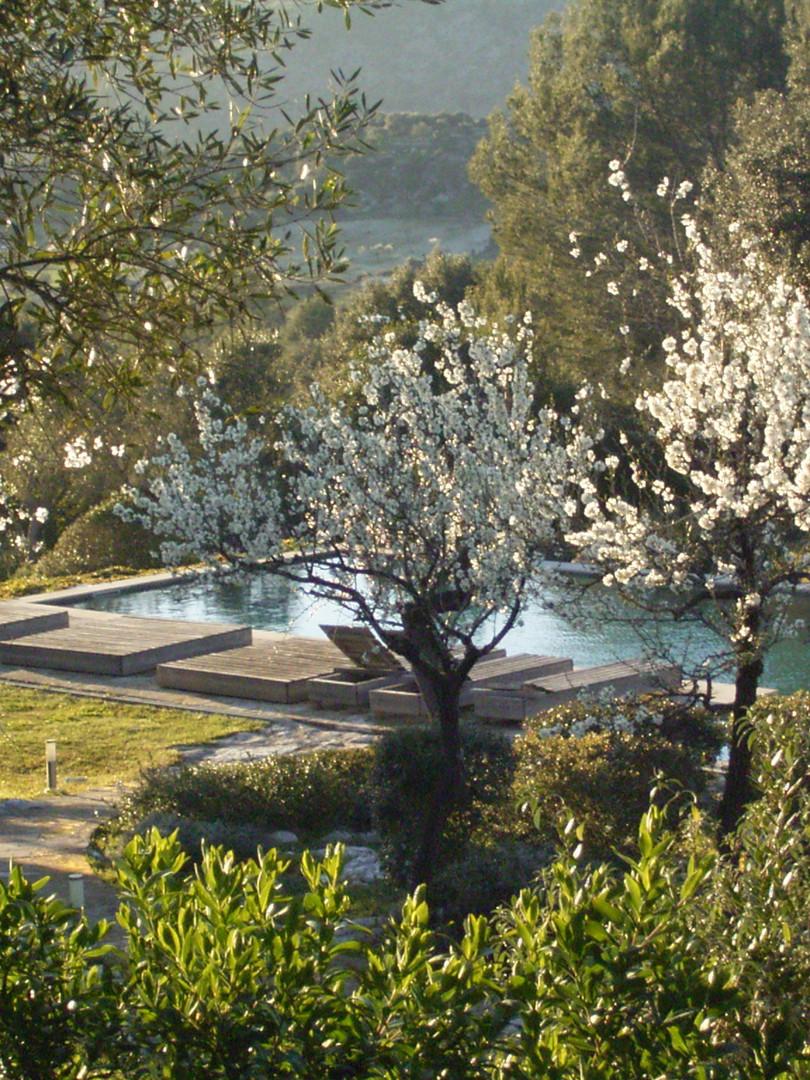 Pool w: almond blossom.jpg