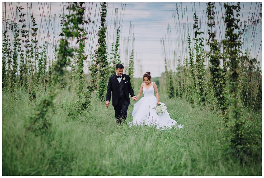 Bride and Groom Portrait among the hops - Vanish Brewery wedding Leesburg - Frederick Wedding Photographer - Katherine Elizabeth Photography