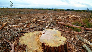new-brunswick-clear-cut.jpg