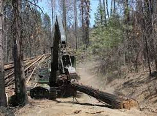 Post-fire logging(2).jpg