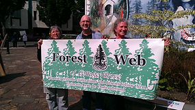 Forest Web of Cottage Grove