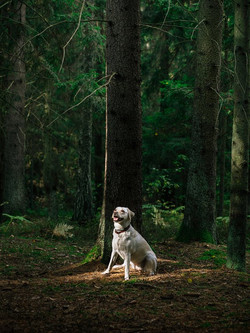 nature-forest-trees-animal
