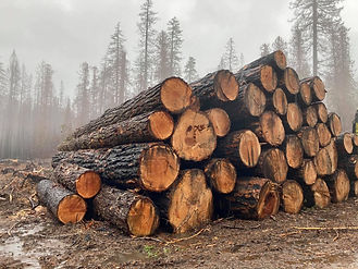 hazard trees Breitenbush_SamKrop.jpg