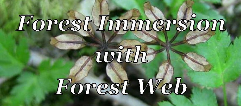 Forest Immersion - YouTube Thumbnail-pag
