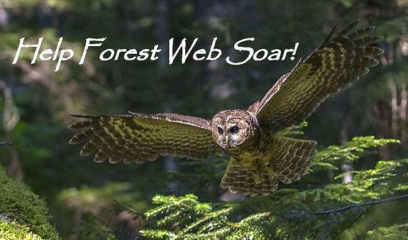 Help Forest Web Soar-page-001.jpg