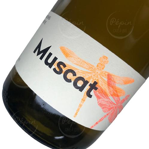 """Muscat """"en macération"""" 2019 - Genève"""