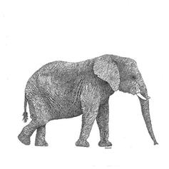 Elephant Ink