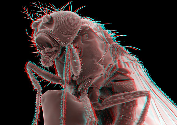 Fruitfly 2 Foamex Print 3D