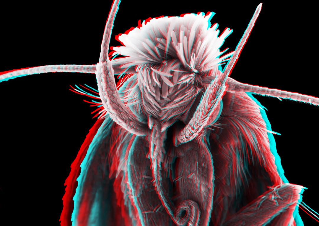 Moth 3D 5