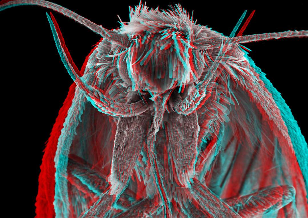 Moth 3D 4