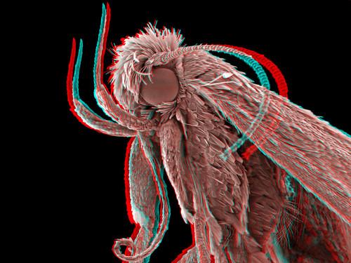 Moth 3D 1