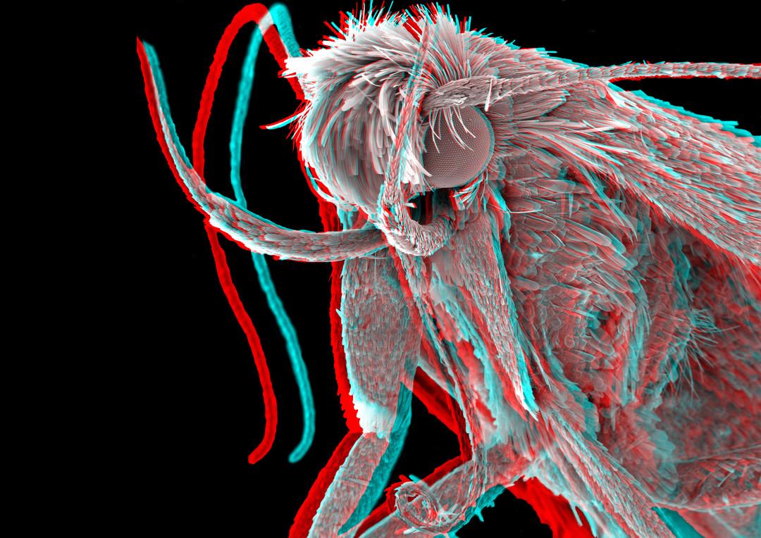 Moth 3D 2