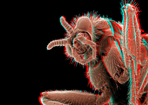 March Fly 3D 1